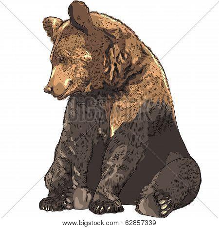 Vector Funny Bear Sitting