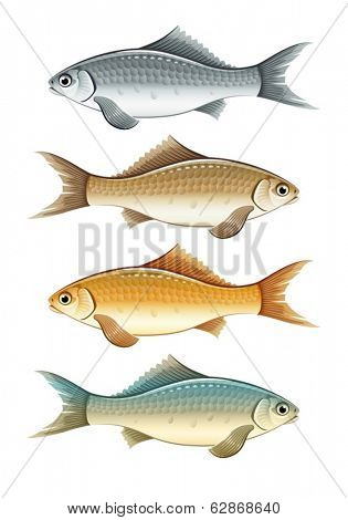Set of live color fishes. Eps10 vector illustration. Isolated on white background