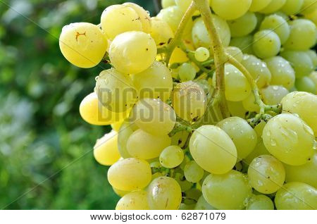 Close-up Of Ripe Grapes