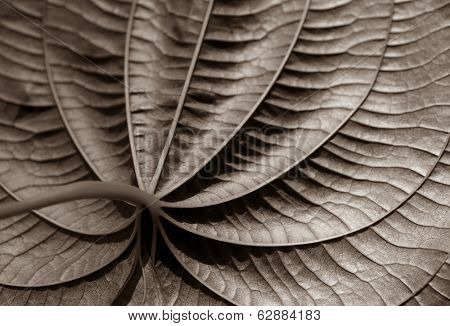 beautiful Monochromatic Image of a tropical leaf