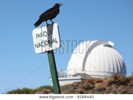 Black bird sitting on the sign