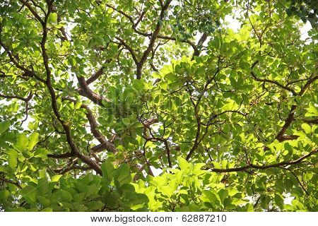 Green Leaves And Branch