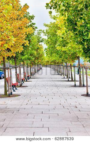 Tree Lined Pedestrian Sidewalk