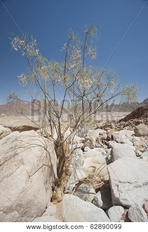Rocky Desert Landscape In Remote Environment