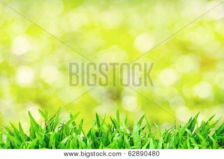 Green Grass Natural Background With Selective Focus