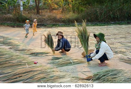 Vietnamese Young Labor At Vietnam Countryside