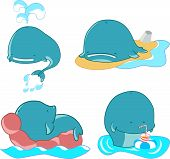 foto of blubber  - vector set of cartoon happy characters whales - JPG