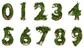 All Numbers Constructed From Vines And Leaves