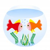 pic of swim meet  - two loving fishes swim in round sea aquarium - JPG
