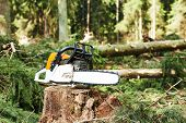 pic of chainsaw  - gasoline chainsaw on cut wood in forest - JPG