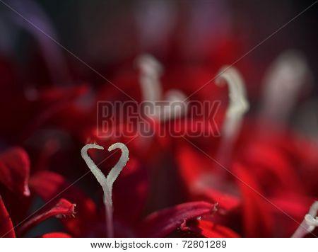Heart-Shaped Pistil