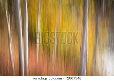 Canadian Forest Abstract