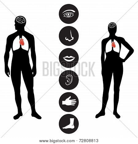 Medical Human body part icon - Illustration