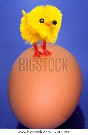 Chick On An Egg