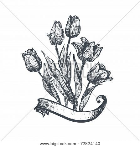 Hand drawn tulips. Vector illustration.