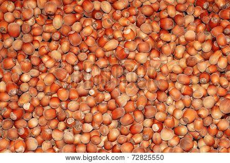 Hazelnuts Close-up As Background