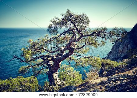 Tree And Sea At Sunset. Crimea Landscape
