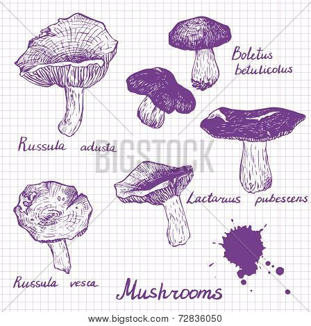 Set of linear drawing mushrooms