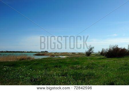Glade Near Lake Moinaki