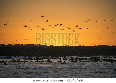 Sunset On Dyer Island