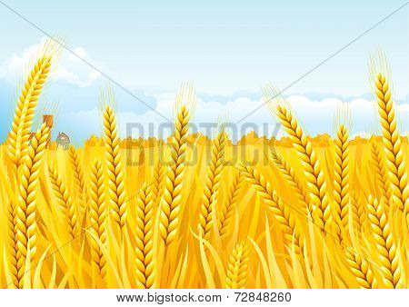 Grain fields