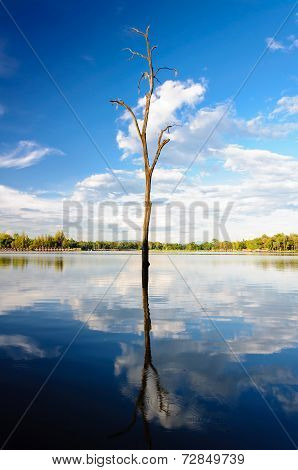 Dead Tree Reflection In Water