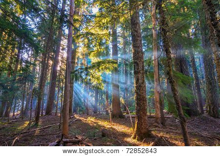 Sunrays Shining Through The Morning Mist.