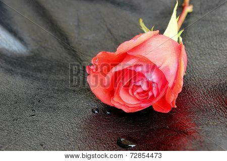 Red Rose On Black Leather