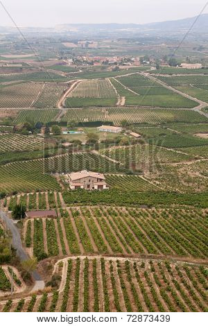 Alava Vineyards, La Rioja, Northern Spain