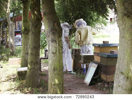 Beekeepers In The Forest