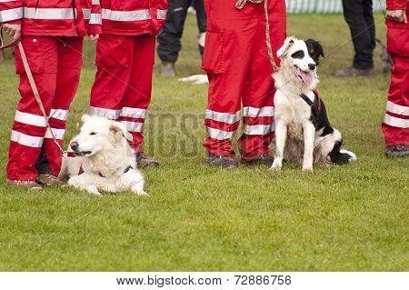 Rescue Dog Squadron