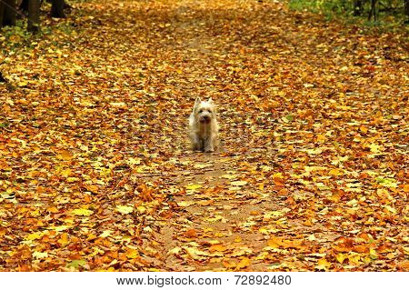 Small Dog Stomping On Carpet Of Yellow Autumn Leaves