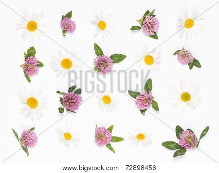 Clover And Daisies
