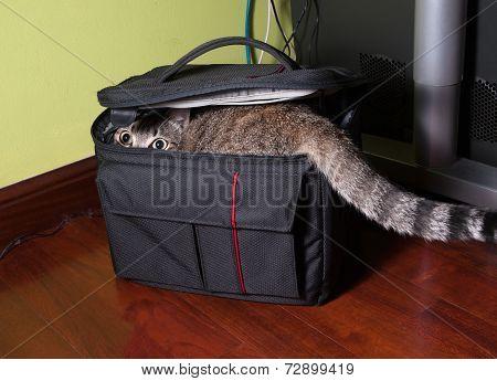 Cat In A Black Bag