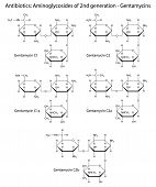 stock photo of antibiotics  - Structural chemical formulas of aminoglycoside antibiotics of second generation  - JPG