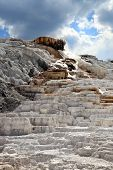 picture of mammoth  - Palette spring in the Mammoth Spring region at Yellowstone - JPG