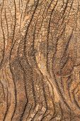 foto of wainscoting  - Old wood texture being eroded - JPG