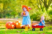 stock photo of baby cowboy  - Two happy children at pumpkin patch during Halloween cute curly little girl in a cowboy hat pushing a wheel barrow with a funny baby boy on a sunny autumn day on a farm - JPG