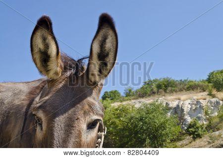 Donkey In A Field In Sunny Day Near The Village