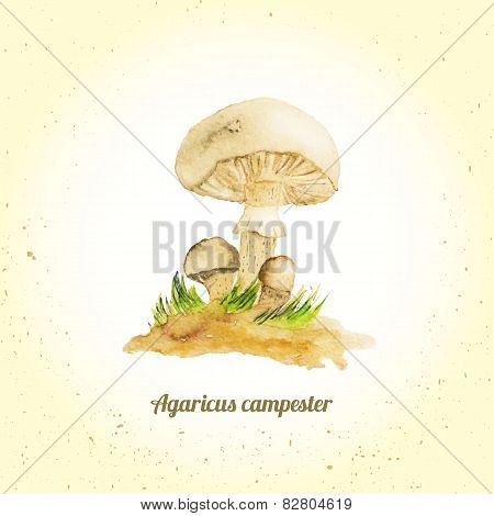 Vector watercolor mushroom champignon - agaricus on graund with grass. EPS10.