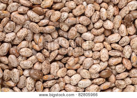 Pinto bean background