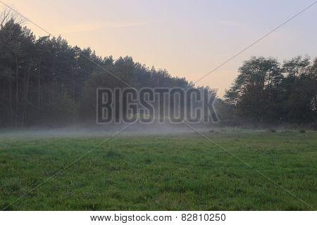 Fog Over Meadow