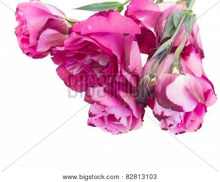 Bunch Of  Mauve Eustoma Flowers