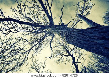 Winter Gnarled Tree - Retro, Faded