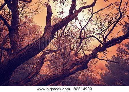 Infrared Oak Branches Under A Cloudy Sky - Vintage