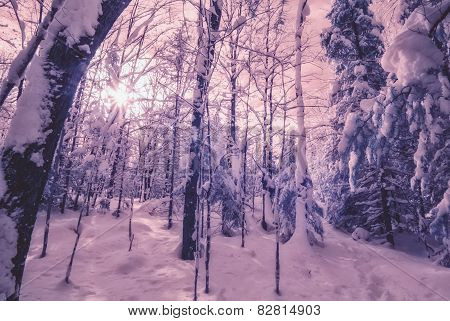 Infrared Winter Forest