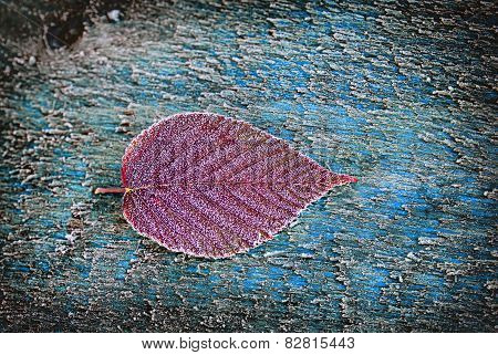 Frosted Red Blackberry Leaf