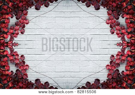 Autumn Border - Red Grape Vine Leaves