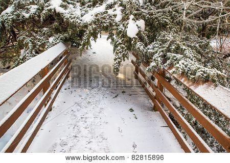Tree Fallen Over A Bridge After Ice Storm