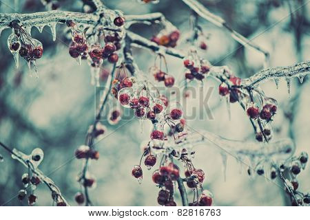 Frozen Red Berries On A Tree - Retro